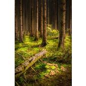 Bergeval in de Ardennen, door Sander Poppe