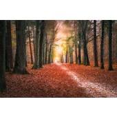 Herfst in het Mastbos